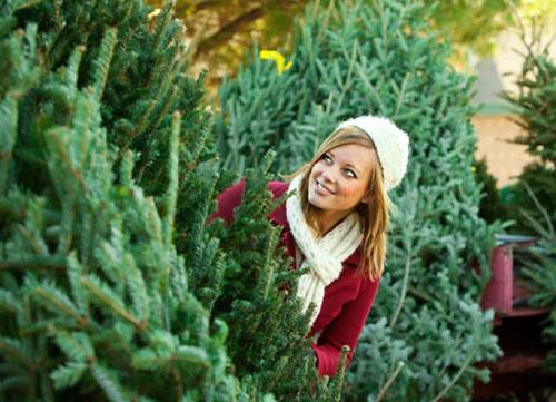 Как выбрать живую елку на елочном базаре