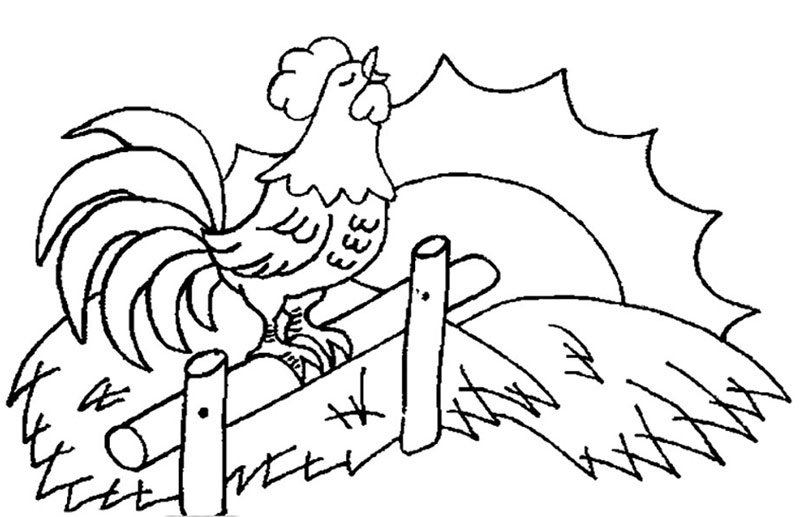 как нарисовать красивого петуха