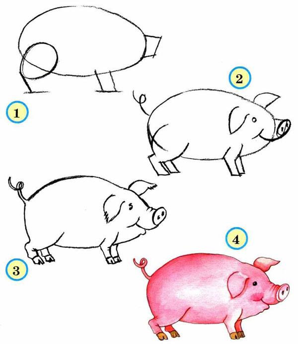 Чертеж рисования свиньи по шагам