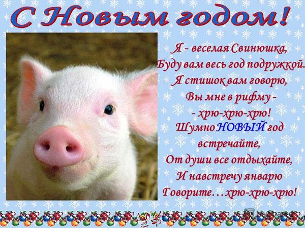 korotkie-teksty-pozdravlenij-v-novyj-god-2019-svini-dlya-sms-1