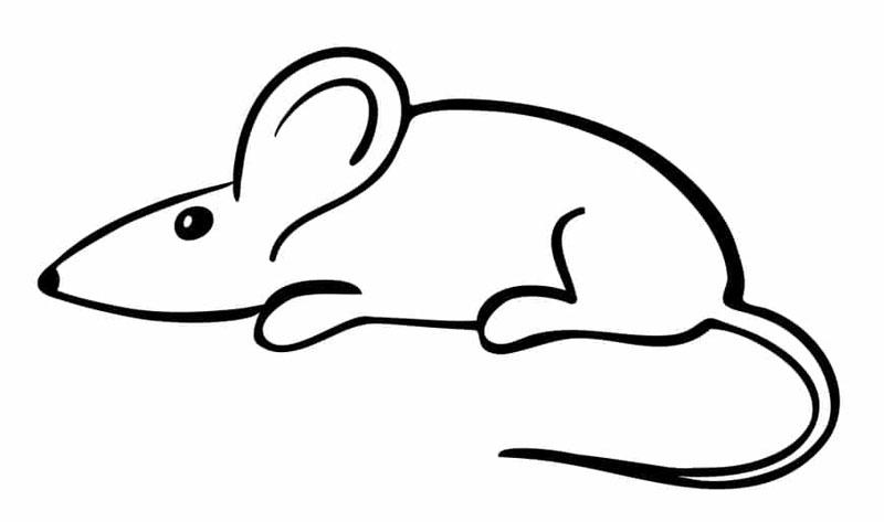 как нарисовать мышь маленькую