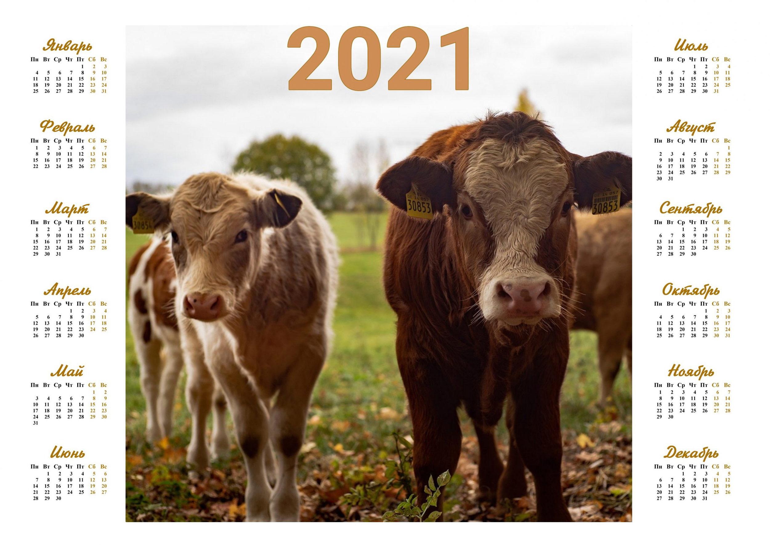 kalendar-na-novyj-god-byka-2021-s-izobrazheniem-simvola-goda-12