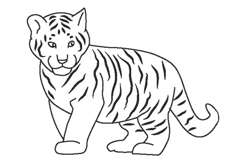 Нарисовать тигра просто