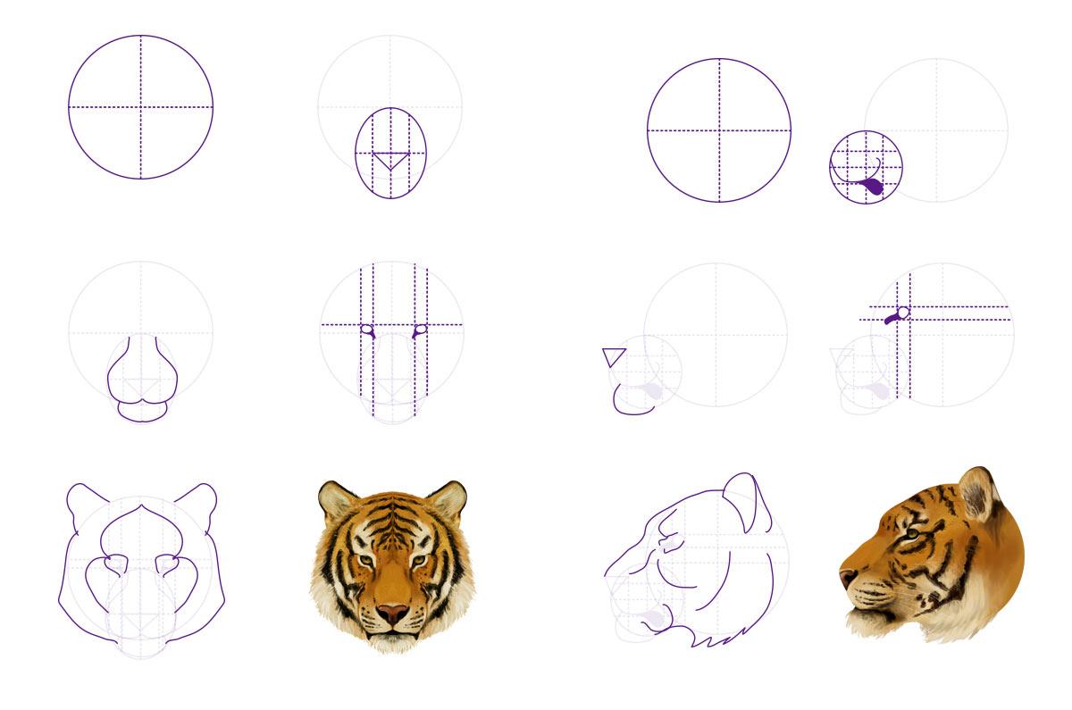 Как рисовать тигриную морду