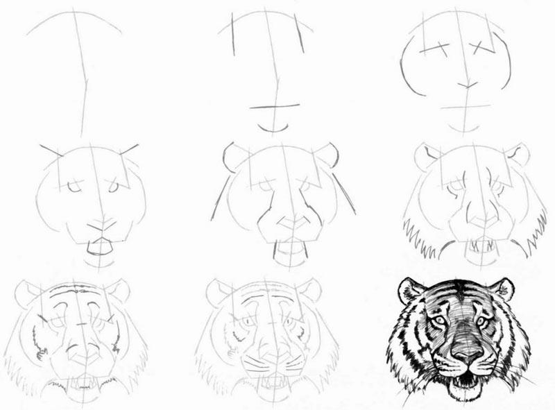 Рисунок головы тигра